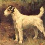 DrahthaarFoxterrier-Gemaelde-von-Arthur-Wardle